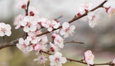 În Moldova vine primăvara! Temperaturile cresc până la +15 grade