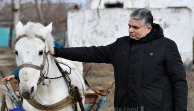 Consulul General al României de la Bălți a cumpărat la licitație calul școlii din Căinarii Vechi