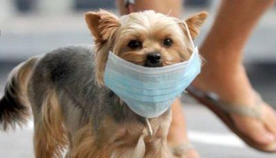 Un câine de companie ar fi contactat coronavirusul de la stăpânul său