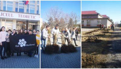 Elevii din Mereni și-au sădit propria livadă de alun pe teritoriul școlii, cu ajutorul echipei Hai Moldova