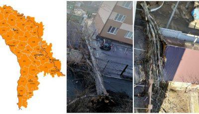 Cod portocaliu! Vântul puternic face ravagii în Moldova: copaci doborâți, acoperișuri distruse
