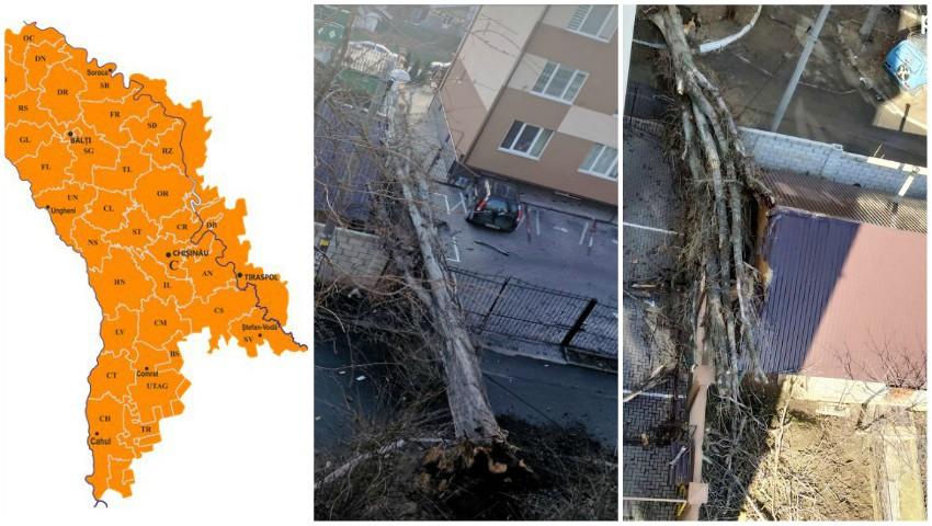 Foto: Cod portocaliu! Vântul puternic face ravagii în Moldova: copaci doborâți, acoperișuri distruse