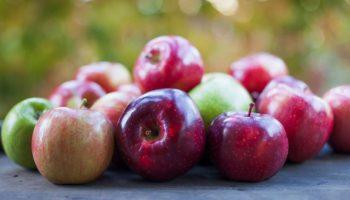 Fructele moldovenești sunt tot mai apreciate în Germania