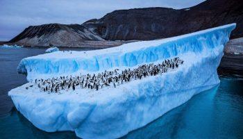 Antarctica a înregistrat cea mai ridicată temperatură din istoria măsurătorilor, de 18,3 grade Celsius