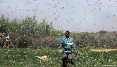 Africa este lovită de cea mai mare invazie de lăcuste din ultimii 70 de ani. Video