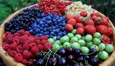 Producătorii de fructe, struguri şi pomuşoare pot beneficia de granturi de la USAID