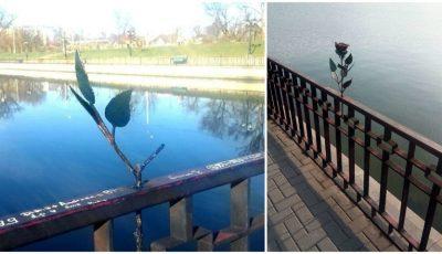 """Trandafirul din parcul ,,Valea Morilor"""" a fost vandalizat din nou"""