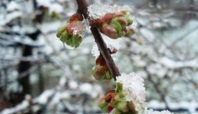 Vine înghețul! Temperaturile vor coborî până la minus 9 grade Celsius