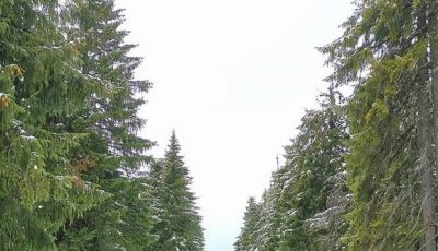 Video. Ninge în nordul Moldovei, la mijloc de aprilie