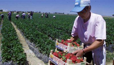 Lucrătorii moldoveni, la mare căutare în UE. Salariul poate ajunge la 3 mii de euro