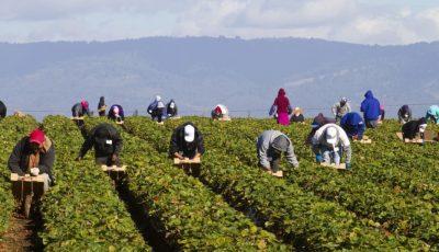 Italia caută soluții la lipsa forței de muncă din agricultură