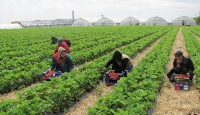 Germania relaxează restricțiile de călătorie pentru muncitorii agricoli sezonieri