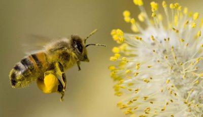 Peste 1,5 milioane de albine au murit otrăvite într-o prisacă din Ungheni