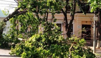 Foto. Vânt puternic în Chișinău, copaci doborâți