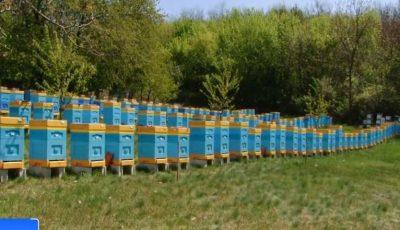 Un apicultor din Glodeni exportă tone de miere în Germania