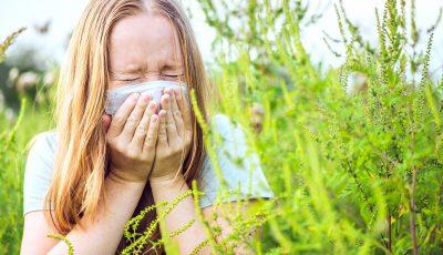 O acțiune binevenită pentru alergici! A fost elaborată o hartă a răspândirii ambroziei pe teritoriul orașului Chișinău