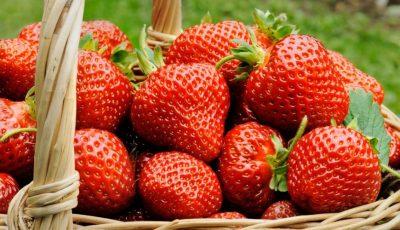 Aromate și dulci. Producătorii autohtoni livrează la ușă căpșune