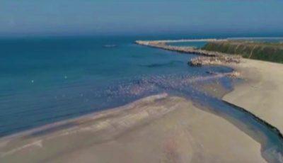 Marea Neagră a început să semene cu Mediterana, iar delfinii vin tot mai aproape de mal