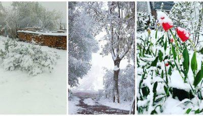 Foto. Mai multe țări europene au fost acoperite astăzi de un strat gros de zăpadă