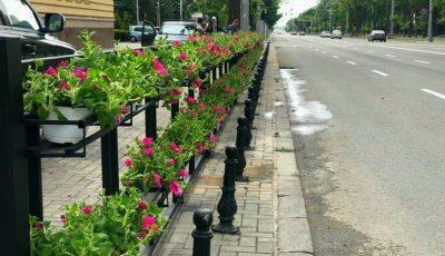 În centrul Capitalei au apărut ghivece cu flori și arbori de tuia