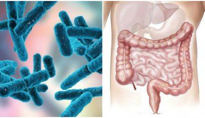 Specii bune de bacterii din cavitatea orală și din intestin. Ce le poate distruge?