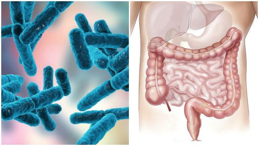 pierderea în greutate bacterii în intestin