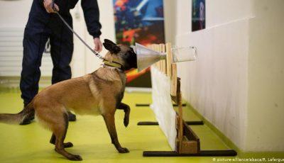 Armata germană antrenează câini pentru a detecta persoanele infectate cu Covid-19