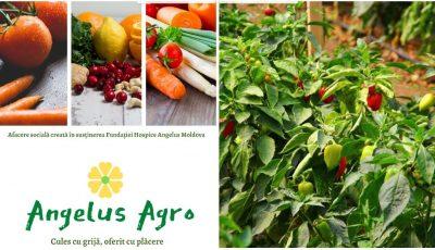 Magazin de fructe și legume bio, miere de albine, ceaiuri din plante naturale și fructe uscate, deschis de către Fundația Hospice Angelus Moldova în centrul Capitalei