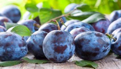 Rusia a distrus mai mult de 16 tone de prune din Moldova