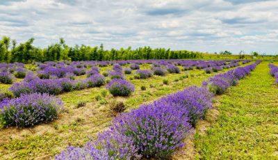 VioPark — locul unde se nasc produsele cosmetice naturale