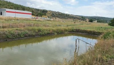 Durere fără margini în satul Șișcani. Frățiorii, care s-au înecat într-un iaz, vor fi petrecuți împreună pe ultimul drum