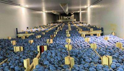 120 tone de prune moldovenești, exportate în Germania