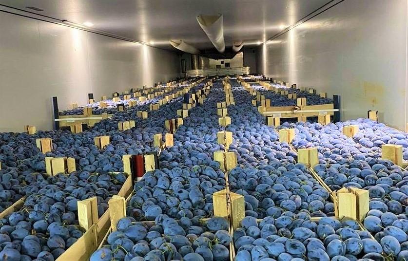 Foto: 120 tone de prune moldovenești, exportate în Germania