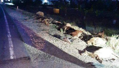 O turmă de oi, spulberată de un microbuz la Ialoveni. 19 oi au murit