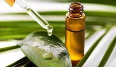 Uleiul de arbore de ceai: beneficii pentru piele, corp și păr!