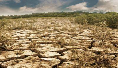 Expert: Defrișarea masivă a pădurilor este cauza principală a secetei din Moldova