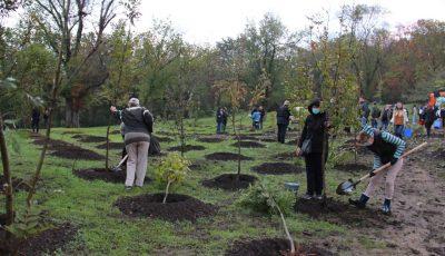 În sectorul Râșcani al Capitalei au fost plantați în jur de 2 mii de copaci