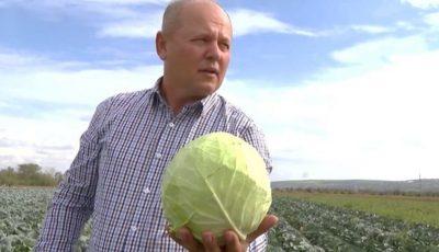 Un agricultor are 90 de tone de varză pe câmp și nu are unde să le vândă