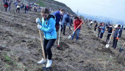 Campania de plantare a arborilor în Chișinău a fost amânată din cauza ploii