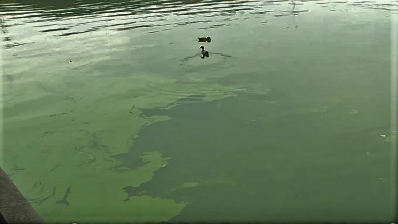 Foto: Îngrijorător. Apa din lacul Valea Morilor, acoperită de un strat verde
