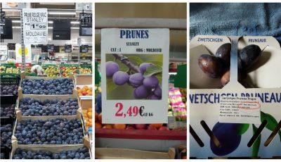 Prunele moldovenești se vând ca pâinea caldă în Germania, Franța și Elveția