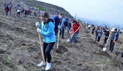 Pe 17 octombrie, se dă startul campaniei de plantare a arborilor pe teritoriul Capitalei. Cetățenii sunt îndemnați să se implice activ