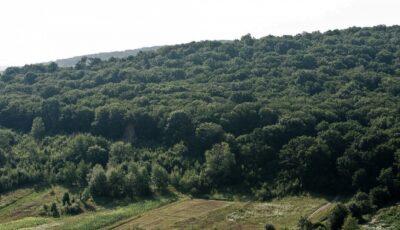 Copii rătăciți într-o pădure din Hâncești. Cum au fost gasiți?