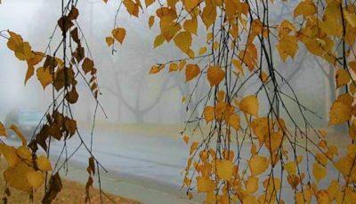Alertă meteo! Cod galben de îngheț