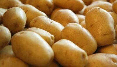 Cartofii moldovenești stau pe câmp. În piețe, se vând cei de import