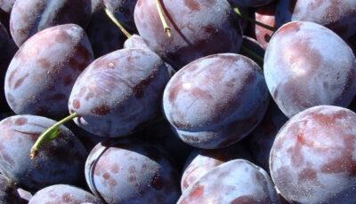 Autoritățile din Rusia au nimicit încă 20 de tone de prune din Republica Moldova