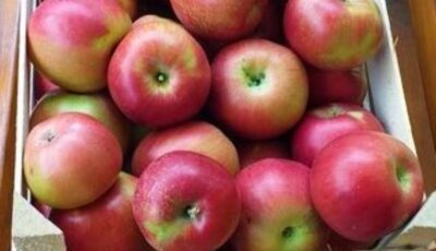 Peste patru tone de mere moldovenești au fost distruse în Rusia