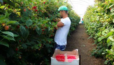 Moldovenii cu cetățenie română se vor putea angaja ca muncitori sezonieri în Marea Britanie. Cât va costa viza?