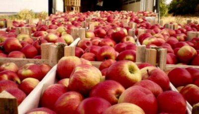 Rusia a interzis importul a 20 de tone de mere