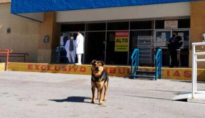 Un câine își așteaptă de o lună în fața spitalului stăpânul care a murit de Covid-19